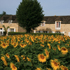 Domaine des Hirondelles (gîtes)